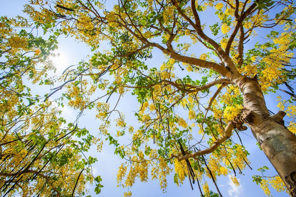 cassiaambaum