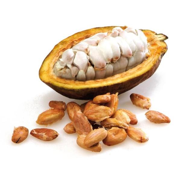 Kakaobohnen getrocknet
